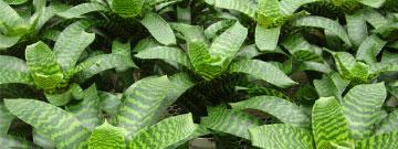 Plant Catalog
